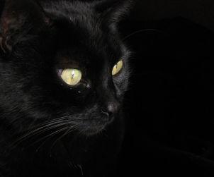 Gatto nero, Picture by Kiko León (Chosovi), Licenze CC BY-SA 2.5