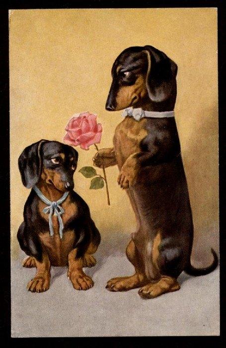 Il Cane Bassotto Immagini Di Carta Mockup Magazine
