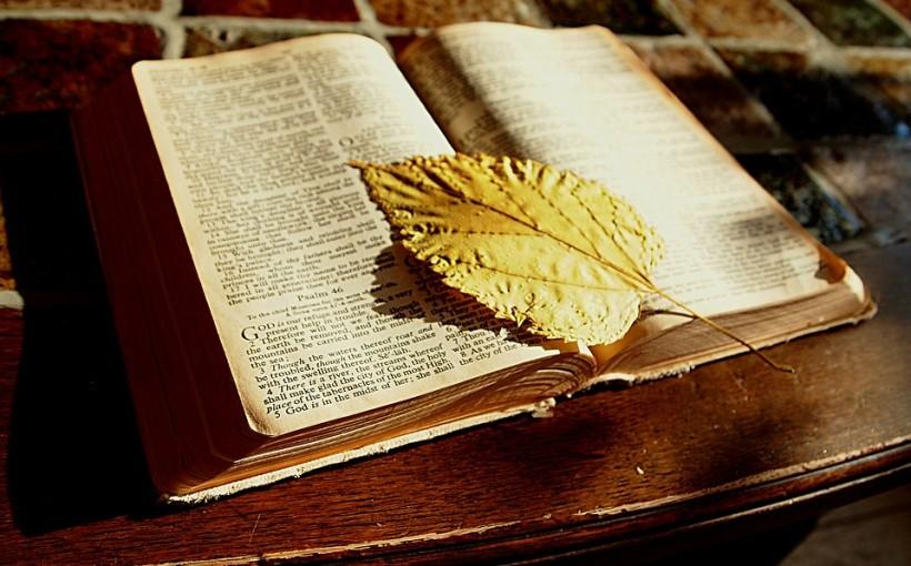 Libro, CC0 Public Domain