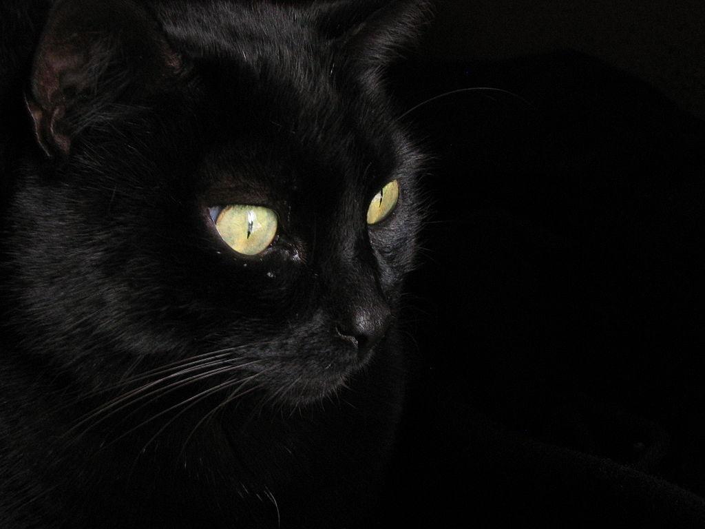 Siamo del gatto! Storie e immagini di gatti